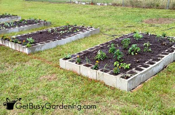 Cement block raised beds garden