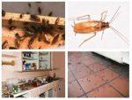 Как бороться с тараканами в домашних условиях – Как избавиться от тараканов в квартире раз и навсегда в домашних условиях
